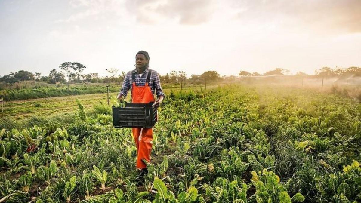 Energieeffiziente KSB Pumpen helfen den Menschen weltweit, ihre Felder zu bewässern